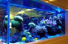 Где выбирать оборудование для аквариумов и декоративных водоемов?