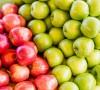 Что стоит знать про поздние сорта яблонь?
